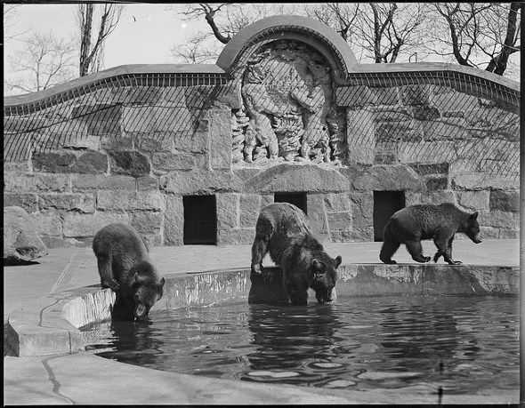 When Franklin Park had bears