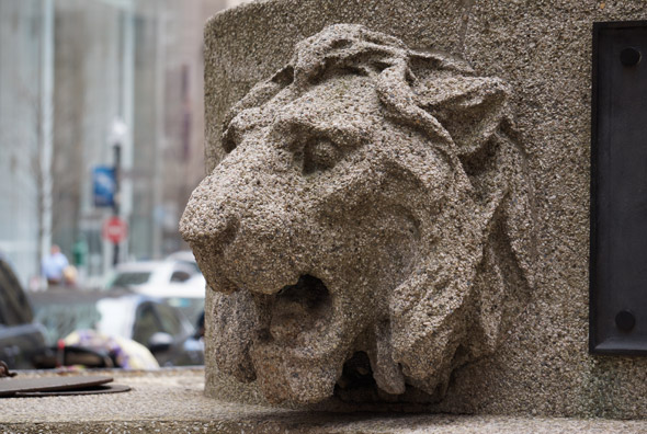 Angell lion