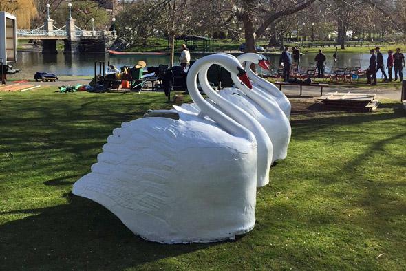 Swan Boat swans