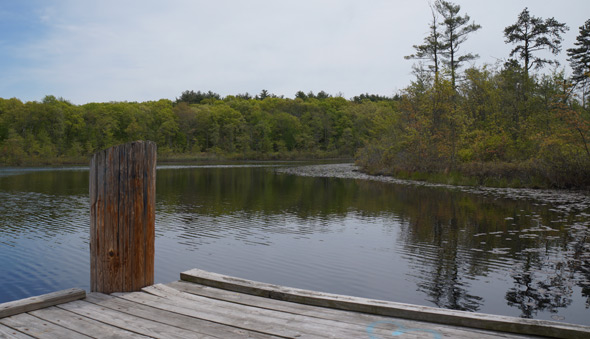 Dock on Turtle Pond in Stony Brook Reservation