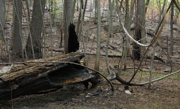 Remains of a fire in Stony Brook Reservation
