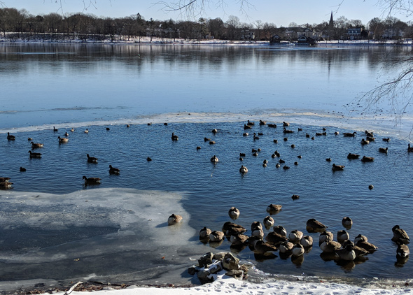 Jamaica Pond covered in ice