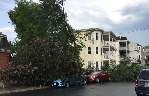 Downed trees in Somerville