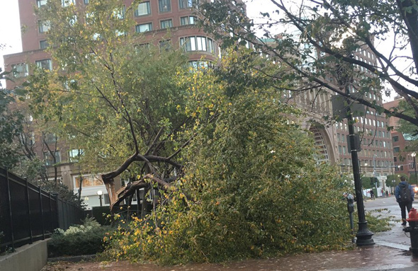 Tree down on the Greenway