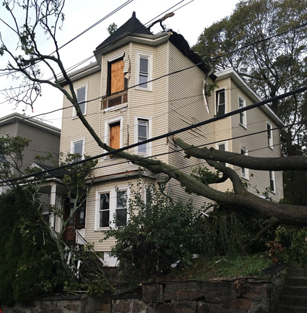 Tree down on Roxbury