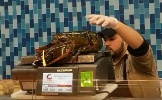 Lobster weighing