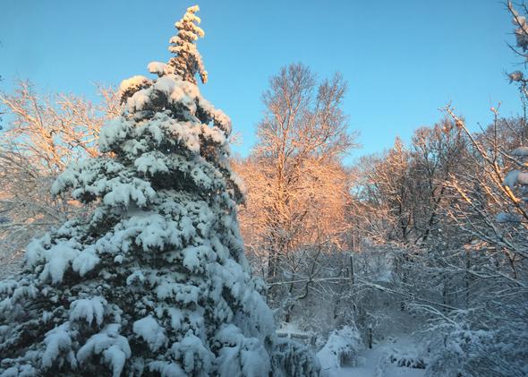 Arnold Arboretum in the snow